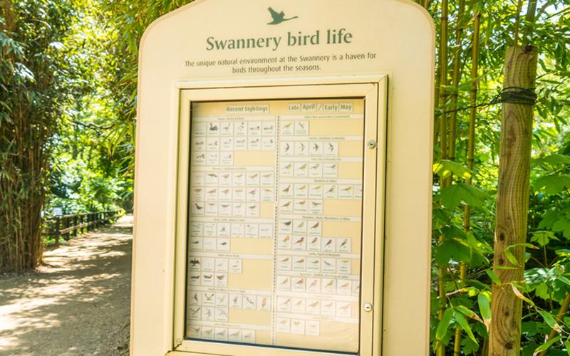 Abbotsbury Many Birds Feel Safe Here