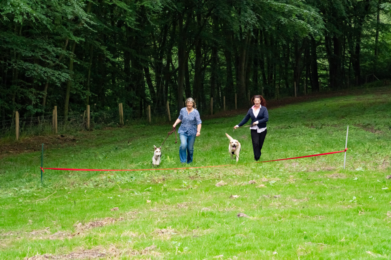 Monkton-Wyld-Best-Camping-Caravanning-West-Dorset-Dog-Friendly-Walk-4