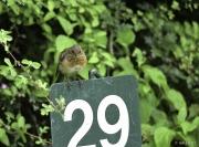 Monkton-Wyld-Juvenile-Robin