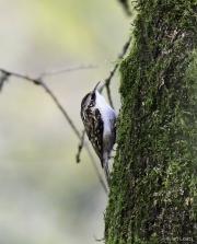 Monkton-Wyld-Treecreeper-1