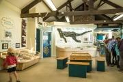 Charmouth-Heritage-Coast-Centre-2