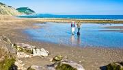 Lyme-Regis-Charmouth-Beach-Fossils-351