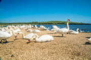 Monkton-Wyld-Best-Holiday-Park-West-Dorset-Camping-Caravanning04