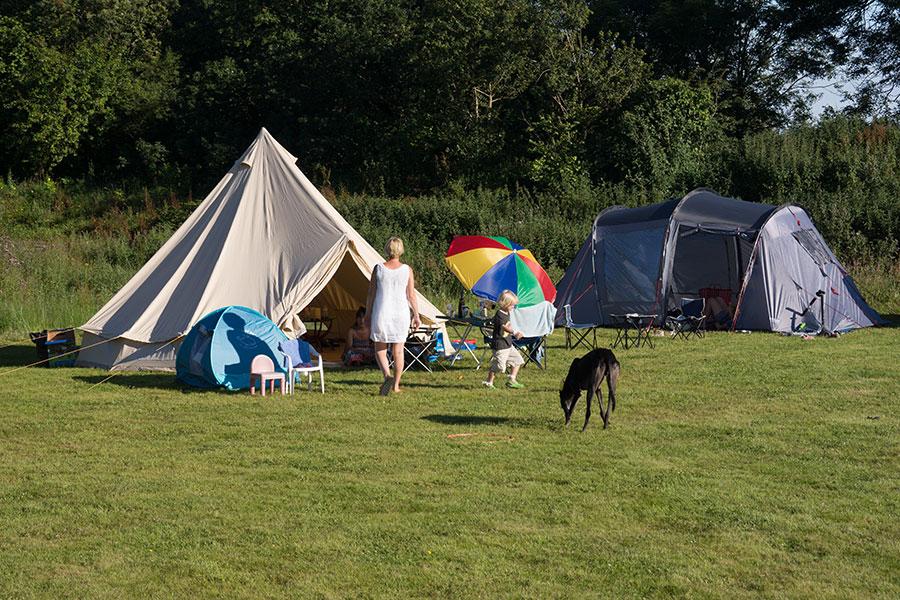 Monkton-Wyld-Camping-Site-Dorset-025