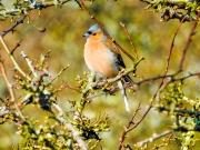 Monkton-Wyld-Camping-Caravanning-Wildlife-Ian-Loats-1