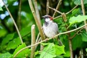 Monkton-Wyld-Camping-Caravanning-Wildlife-Ian-Loats-12