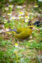 Monkton-Wyld-Camping-Caravanning-Wildlife-Ian-Loats-13