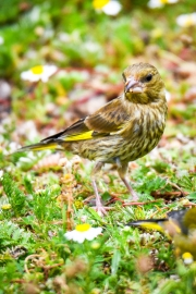 Monkton-Wyld-Camping-Caravanning-Wildlife-Ian-Loats-14