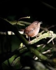 Monkton-Wyld-Camping-Caravanning-Wildlife-Ian-Loats-15
