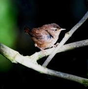 Monkton-Wyld-Camping-Caravanning-Wildlife-Ian-Loats-16