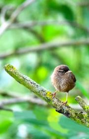 Monkton-Wyld-Camping-Caravanning-Wildlife-Ian-Loats-18
