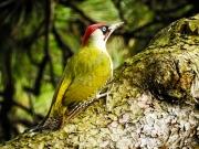 Monkton-Wyld-Camping-Caravanning-Wildlife-Ian-Loats-2