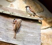Monkton-Wyld-Camping-Caravanning-Wildlife-Ian-Loats-23