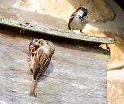 Monkton-Wyld-Camping-Caravanning-Wildlife-Ian-Loats-24