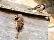 Monkton-Wyld-Camping-Caravanning-Wildlife-Ian-Loats-25