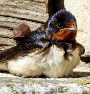 Monkton-Wyld-Camping-Caravanning-Wildlife-Ian-Loats-3