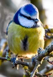 Monkton-Wyld-Camping-Caravanning-Wildlife-Ian-Loats-4