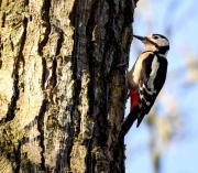 Monkton-Wyld-Camping-Caravanning-Wildlife-Ian-Loats-5