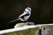 Monkton-Wyld-Camping-Caravanning-Wildlife-Ian-Loats-7