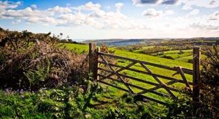 Lyme Regis Landscapes