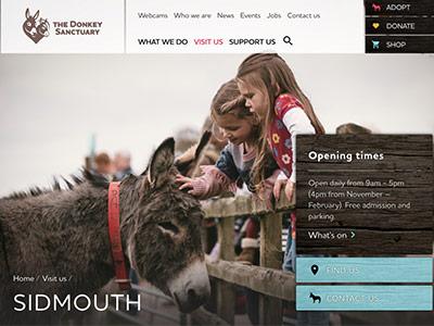 Donkey-Santuary-Devon