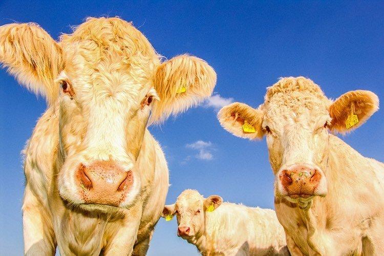Melplash-Agricultural-Show